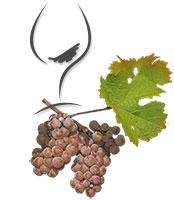 Rebe mit Weinglas. Gernekochen – Mit Wein genießen
