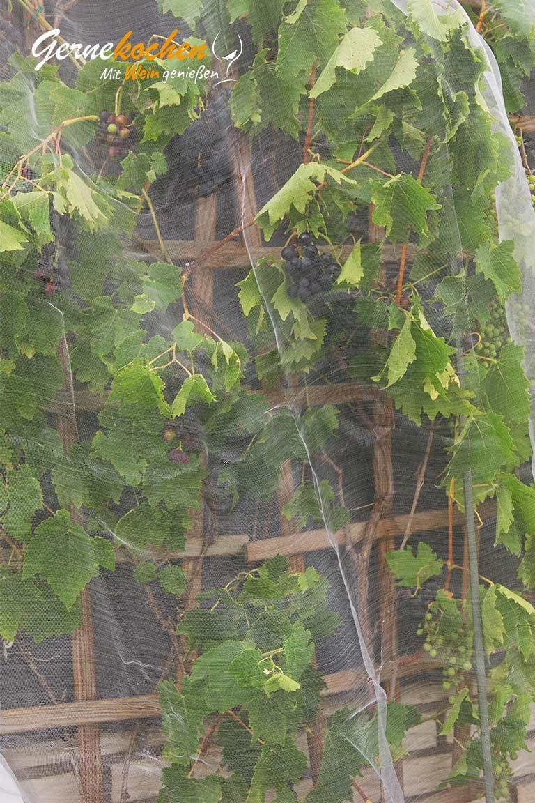 Weintrauben-Kirsch-Smoothie mit Vanille – Terrasse 1