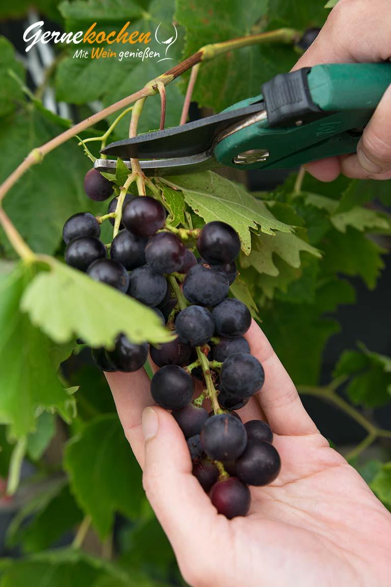 Weintrauben-Kirsch-Smoothie mit Vanille – Terrasse 2