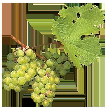 Lange Arneis La Zerbetta. Foodblog mit Weinempfehlung